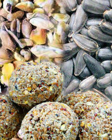 KMG Economy Bird Food Pack