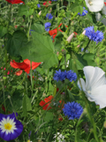 KMGD 100% Diamond Jubilee Annual Wildflower Seeds Mixture