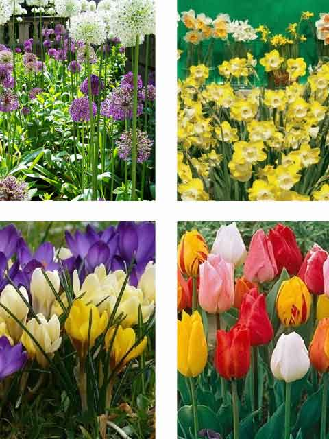 Gardeners Value Bulb Collection