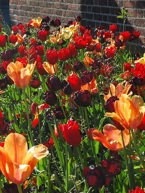 Spring Fire Bulb Collection