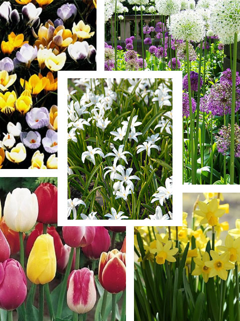 Everlasting Bulb Collection