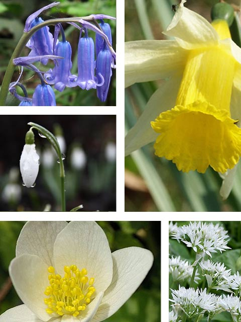 Native Wildflower Bulb Collection