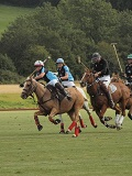 KMG Polo & Gallops Grass Seed