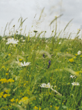 KMG5: Heavy Clay Soils Wildflower Seeds Mixture