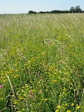 KMG Wildflower Meadow & Field Margin