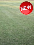 KMG Winter Renovator Grass Seed