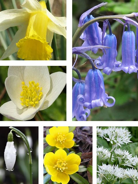Woodland Wildflower Bulb Collection