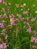 KMG11: Acidic Soils Wildflower Seeds Mixture