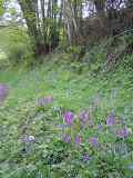 KMG8: Woodland & Heavy Shade Wildflower Seeds Mixture