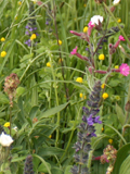 KMGX: Dual Purpose Wildflower Seeds Mixture
