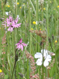 KMG4: Loam & Alluvial Soils Wildflower Seeds Mixture