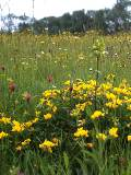 KMG3: Dry, Sandy Loam Soils Wildflower Seeds Mixture