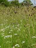 KMG14: Wild Bird Wildflower Seed Mixture