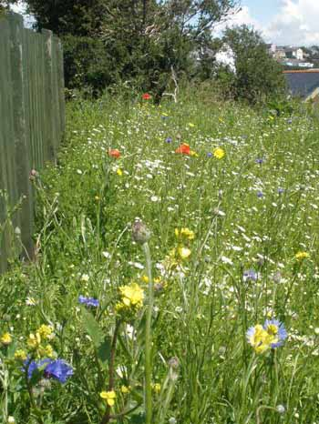KMG10: Coastal Areas Wildflower Seeds Mixture