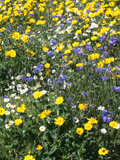 KMGRE 100%: Restore & Enrich Wildflower Seeds Mixture